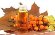 Какие болезни может излечить облепиховое масло